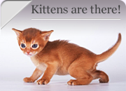 Kittens are there