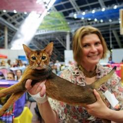 Зачем и как ходить на выставку кошек