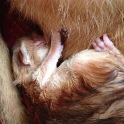 newborn_sorrel