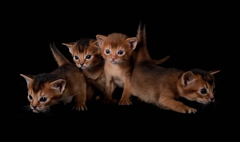 NEW! Кошечка для разведения – 5. В ответе за тех, кого приручил.